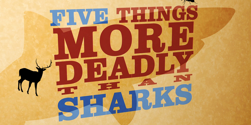 5 Everyday Things More Dangerous Than Sharks