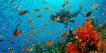 Massive Marine Protections Enacted in Australia