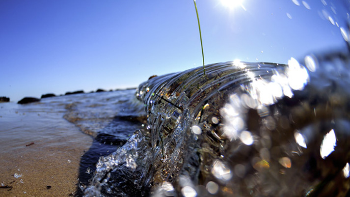 Fisheye: A Stand of Seagrass