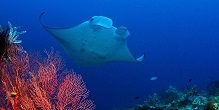 Blue Zoo: Manta Ray
