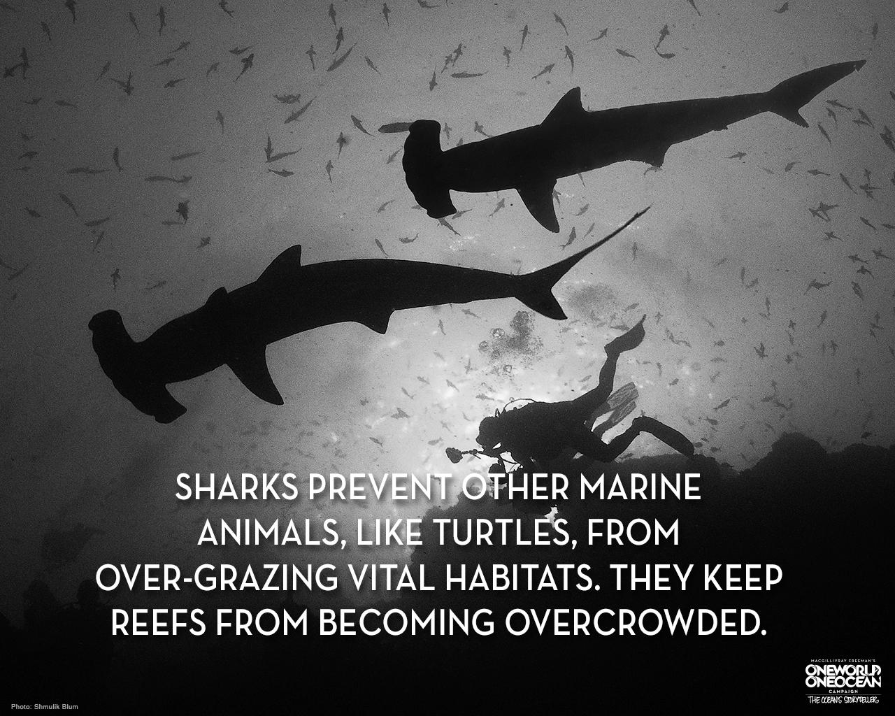 Sharks Help The Ocean