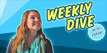 The Weekly Dive Vol. 6