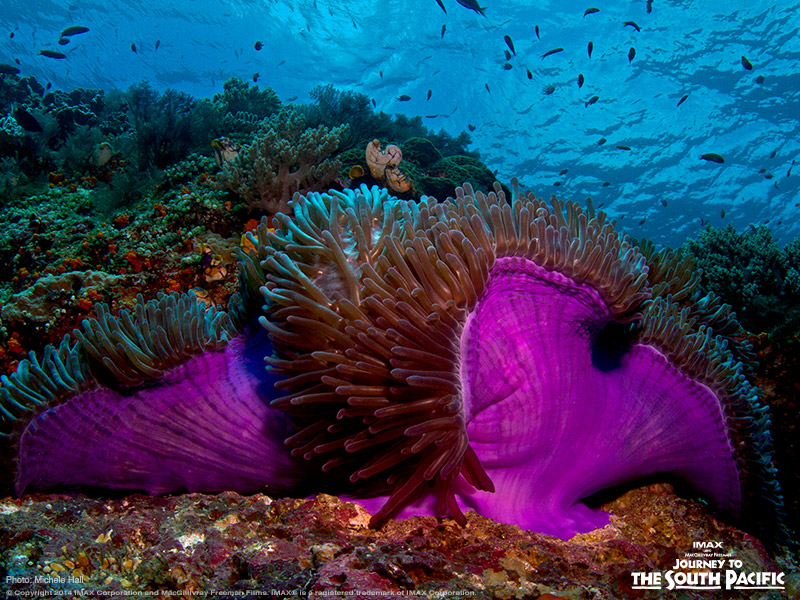22 Sea Animals Of West Papua One World One Ocean