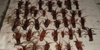 Lobster Poachers Caught at Heisler Reserve