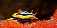Ocean's Five: Nudibranch Super Powers