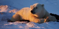 Ocean's Five: Polar Bear Countries