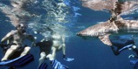 "Playing ""Tag"" With Sharks"