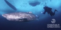 The Reel: Diving Under the Ice with the Greenland Shark