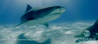 The Reel: Shark Tagging in the Bahamas