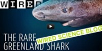 The School: How Do Greenland Sharks Do That?